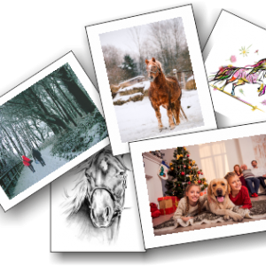 New and Favourite Christmas Cards